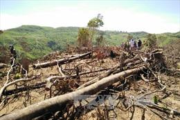 Phát hiện tang vật vụ phá rừng tự nhiên ở Bình Định