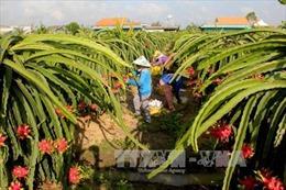 Ứng dụng công nghệ cao vào nông nghiệp - Bài 1: Tạo thói quen sản xuất mới
