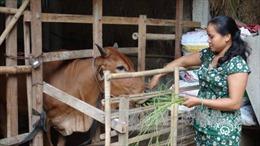 Khởi sắc vùng đồng bào dân tộc Khmer