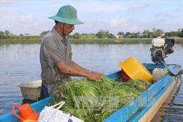 Đồng bằng sông Cửu Long mùa nước nổi - Bài 1: Sinh kế của người nghèo