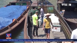 Quảng Ninh liên tiếp bắt giữ 3 vụ vận chuyển cá nhập lậu