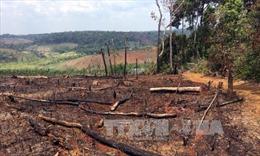 Đắk Nông: Xử lý nghiêm trách nhiệm người đứng đầu liên quan đến các vụ phá rừng