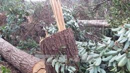 Điều tra làm rõ vụ chặt phá 3,3 ha rừng phòng hộ ở Tiên Yên, Quảng Ninh