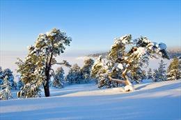 Triển lãm ảnh 'Thiên nhiên miền Bắc nước Nga'