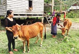 15 năm 'phủ sóng' tín dụng chính sách ở huyện Bố Trạch, Quảng Bình