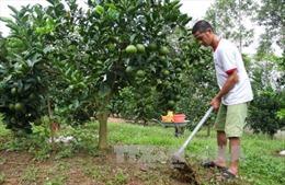 Tăng cường năng lực để nâng cao hiệu quả hoạt động khuyến nông