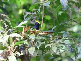 Phát hiện nhiều loài chim quý tại Khu bảo tồn thiên nhiên Xuân Liên, Thanh Hóa