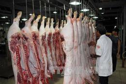 Cà Mau: Kiểm tra đột xuất tình trạng tiêm thuốc an thần cho lợn