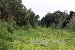 Ngập lụt gây ảnh hưởng tới đời sống và sản xuất ở lâm phần rừng U Minh Hạ