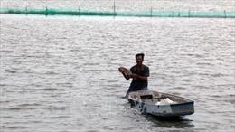 Phát triển nuôi cá trên đồng ruộng mùa nước nổi