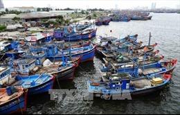 Đà Nẵng xử lý mức cao nhất với tàu cá tiếp tục vi phạm khai thác IUU