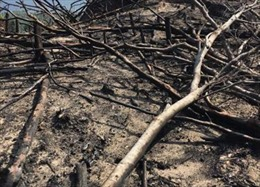 Bình Định: Hàng chục ha rừng tự nhiên tiếp tục bị tàn phá