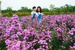 Thảo nguyên hoa khoe sắc giữa mùa thu Hà Nội