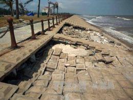Ứng phó với bão số 12: Bảo vệ các tuyến đê biển xung yếu, gia cố điểm có nguy cơ sạt lở
