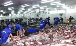 Giá cá tra nguyên liệu tăng do nguồn cung hạn chế