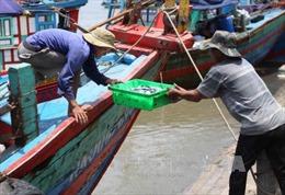 Nghệ An đầu tư nâng cấp các cảng cá, bến cá