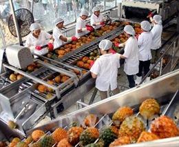 Nâng cao chất lượng chuỗi giá trị trong ngành thực phẩm Việt Nam