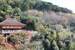Thăm ngôi chùa nổi tiếng nhất cố đô Kyoto