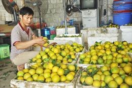 Hội chợ tôn vinh sản phẩm cam Hưng Yên