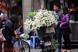 Cúc họa mi đem đông về trên phố Hà Nội