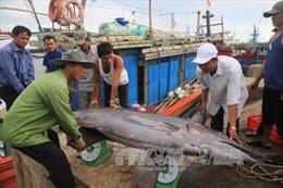 Xử lý hải sản tồn đọng tại 4 tỉnh bị sự cố môi trường biển