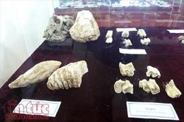 Trưng bày hiện vật khảo cổ học chùa Nhẫm Dương có niên đại hàng vạn năm