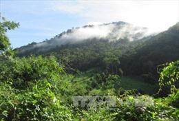 Đánh thức tiềm năng du lịch sinh thái Vườn quốc gia Phước Bình