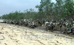 Rác 'bức tử' rừng ngập mặn nguyên sinh ven đê sông Lam