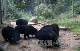 Trên 5.000 người dân huyện Phúc Thọ ký đơn 'giải cứu' gấu bị nuôi nhốt