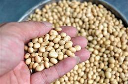 Trung Quốc miễn thuế nhập khẩu một số mặt hàng nông sản cho 5 nước châu Á