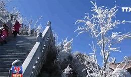 Mưa tuyết phủ trắng đỉnh Fansipan
