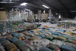 Xuất khẩu gạo năm 2017: Tăng trưởng vượt kỳ vọng