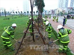 'Tết trồng cây' phải thiết thực, hiệu quả
