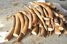 Truy tố nguyên cán bộ hải quan 'rút ruột' ngà voi, sừng tê giác