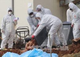 Hàn Quốc xác nhận ổ dịch cúm gia cầm H5N8