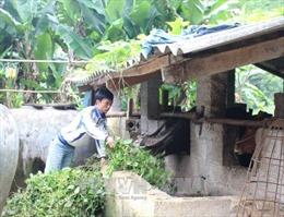 Tín dụng chính sách xã hội giúp tạo sự ổn định ở nông thôn