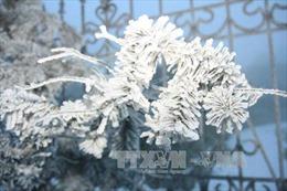 Rét đậm, rét hại diện rộng, nhiệt độ thấp nhất ở Mẫu Sơn là 1,6 độ C