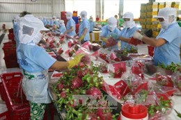 Xuất khẩu rau quả đạt hơn 1,3 tỷ USD trong 4 tháng