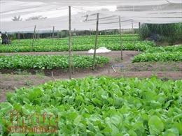 Ngành nông nghiệp TP Hồ Chí Minh đặt mục tiêu đạt 500 triệu đồng/ha/năm