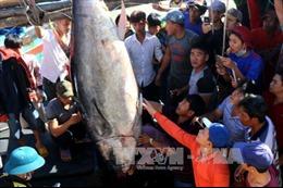 Ngư dân Phú Yên được 'lộc biển' đầu năm