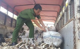 Bắt quả tang vận chuyển 1,2 tấn mỡ, sản phẩm động vật bốc mùi hôi thối