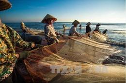 Những thách thức trong phát triển nghề đánh bắt hải sản