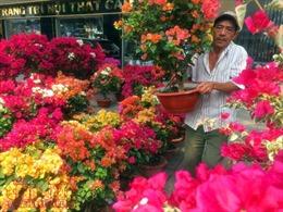 """Hoa cảnh, cây kiểng trưng Tết """"tràn"""" về phố Sài Gòn"""