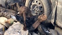 Bé gái trong đống đổ nát: Bi kịch của Mosul được giải phóng