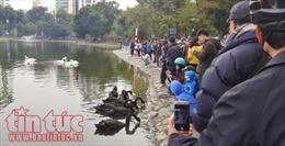 Xem cá chép của ông Công, ông Táo chờ chầu Trời ở 'hồ Thiên Nga'