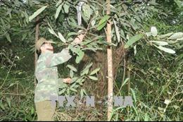 Lồng ghép chiến lược thích ứng dựa vào hệ sinh thái tại Việt Nam