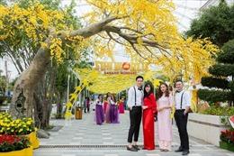 Sẽ tiếc hùi hụi nếu lỡ cơ hội xem 'Mai vàng sắc xuân' ở Sun World Danang Wonders