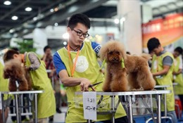 Người dân Trung Quốc mạnh tay chi tiêu cho thú cưng