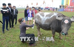 Độc đáo Hội thi vẽ trang trí trâu Lễ hội Tịch điền Đọi Sơn