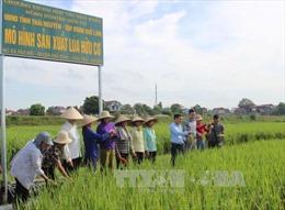 Phát triển nông nghiệp hữu cơ - Xu hướng tất yếu